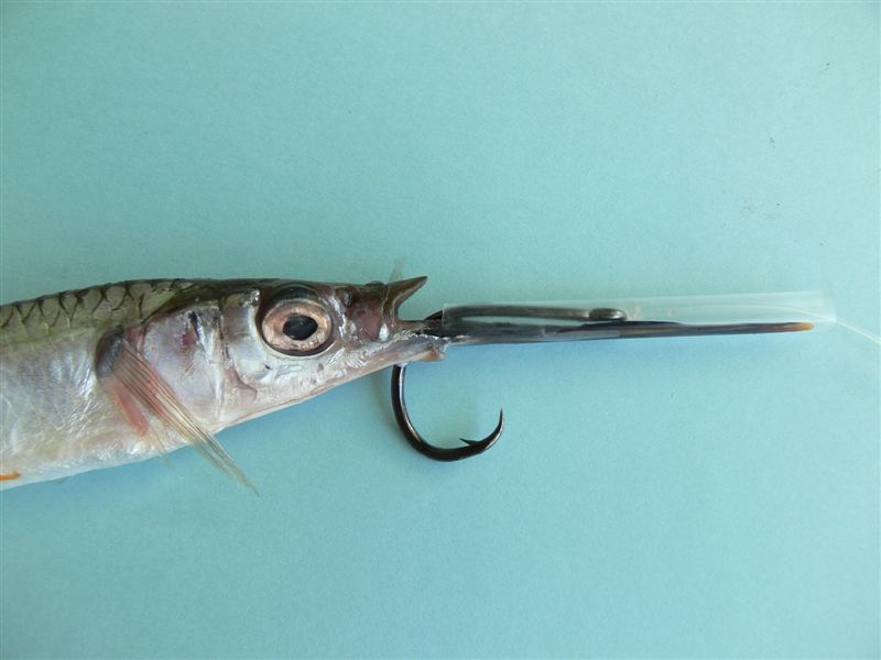 Swordfish Rig  300# Mono with Black Stainless Steel Hook